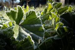 Frost_Polar_3